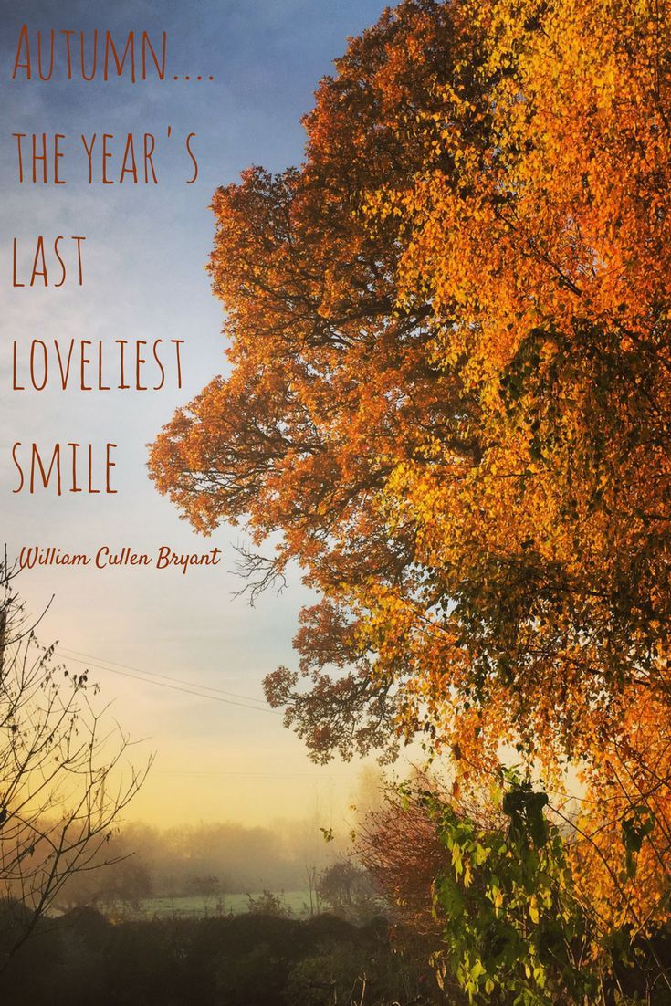 Autumn...the year's last loveliest smile. William Cullen Bryant
