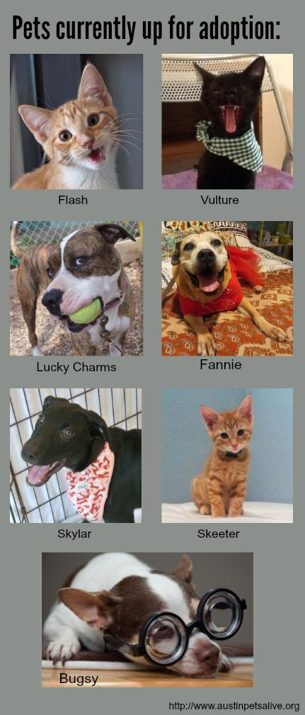 These pets are up for adoption at Austin Pets Alive, The