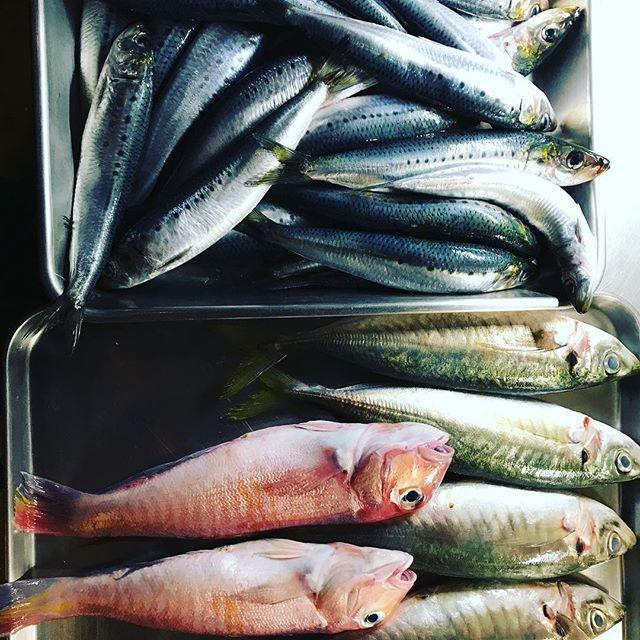 真鰯、丸アジ、甘鯛。 真鰯はオイルサーディンで、甘鯛はアクアパッツァ、これは決まってるんです…ですがアジを何にするか決まっていません。笑 さて、なにに使おう。笑 #ワイン食堂COCOLONA #Lunch 11:30〜14:30(L.O 14:00)※月〜金 #Dinner 18:00〜0:00(L.O 23:30) #水曜日 〒564-0062 #吹田市垂水町1-41-13エスポワール江坂A-1 1F ℡09011339866 #ワイン #パスタ #肉 #魚 #ランチ #ディナー #江坂 #イタリアン #魚