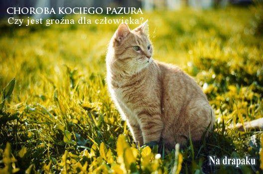 Bartonelloza - Choroba Kociego Pazura