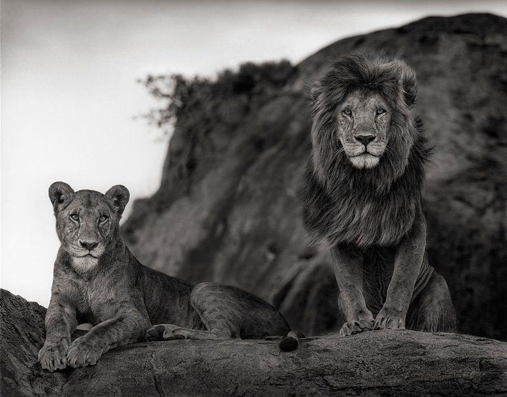 Nick Brandt Lion Couple