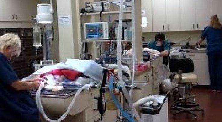 18++ Scottsdale hills animal hospital ideas