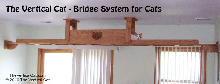 Cat Bridge with Tunnel   The Vertical Cat - Contemporary Cat Furniture, Trees, Shelves and Stairs   Create a room with No Corners