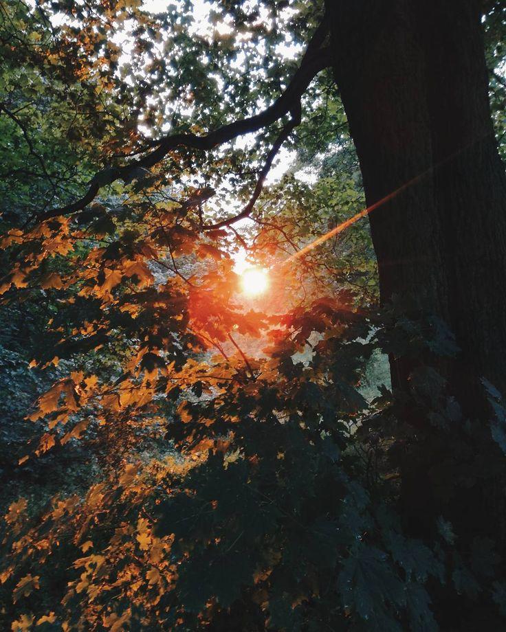 #sun #summer #holidays #nature #forest #tree