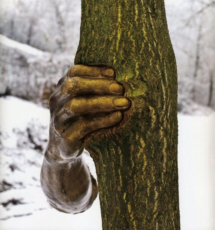L'artiste italien Giuseppe Penone qui travaille souvent sur la nature et les arbres a créé une série de sculptures de bras en bronze qui viennent agripper des troncs d'arbres, s'enfonçant dans leur écorce au fur et à mesure de leur croissance.