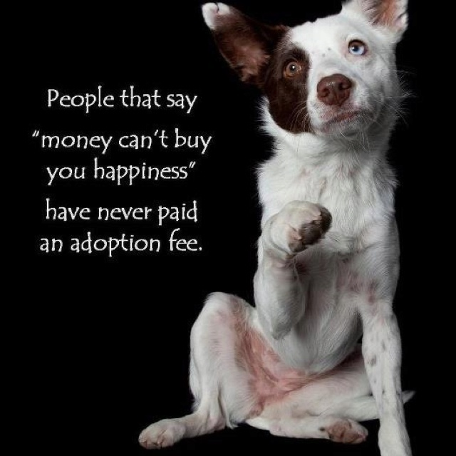 should dogs be bought or adopted A dog should change your lifestyle, building in more activity to every day, but that doesn't mean you need to sell all your chinos and replace them with running shorts.