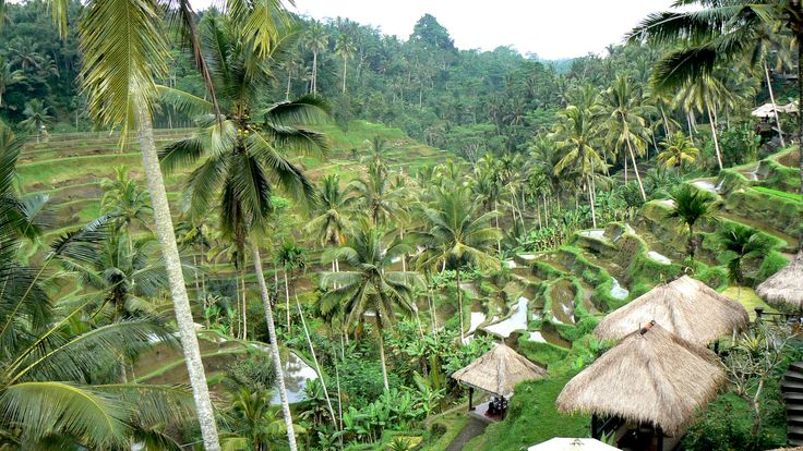 Ubud, rice field terraces. Bali