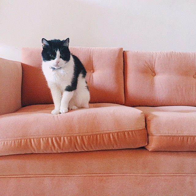 Black And White Cat Dusty Rose Peach Salmon Velvet Sofa