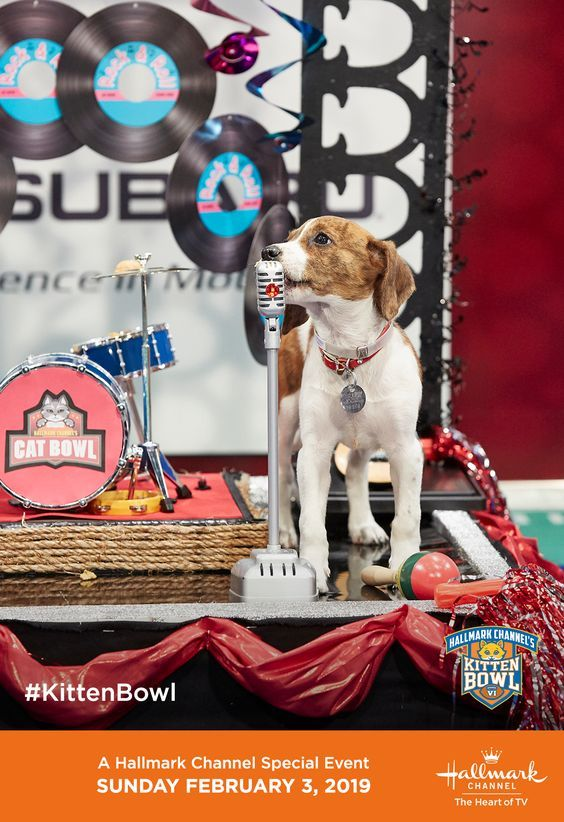 Don T Miss Kitten Bowl Vi S Halftime Show Starring Adoptable