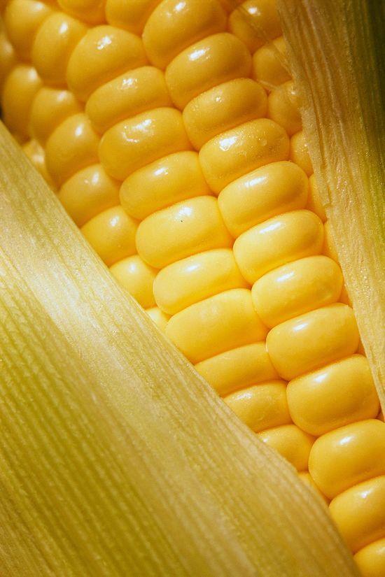 Le Jaune à Rungis : le Maïs