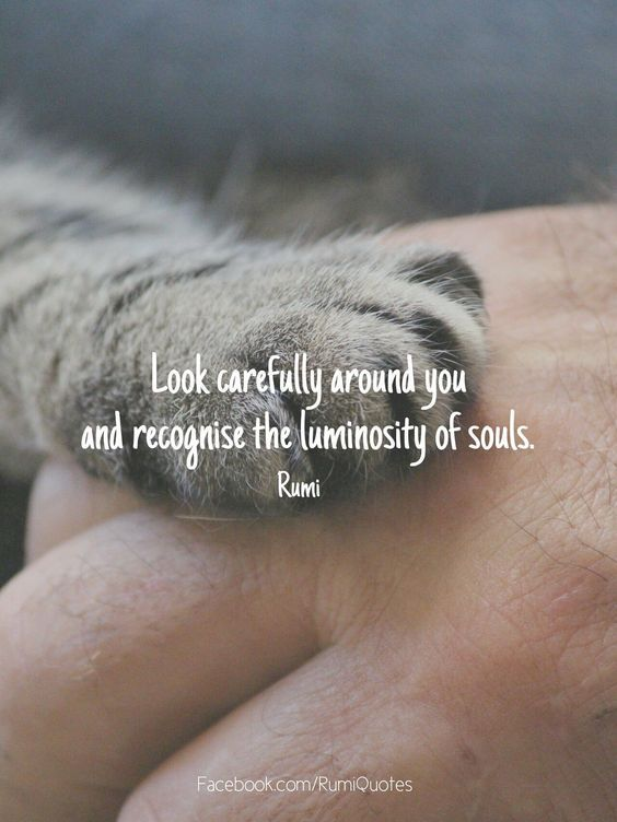 Look carefully around you and recognize the luminosity of souls. ~ Rumi
