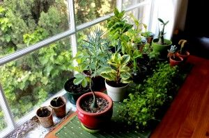 5 Ways House Plants Benefit Your Health & Life