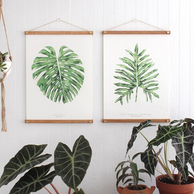 "S a l e ! May the 4th be with you 12""x16"" Monstera and Lacy Tree Philodendron prints are now marked down to $22 in my shop! Sale ends tomorrow. Message or email me if your order is a gift!"