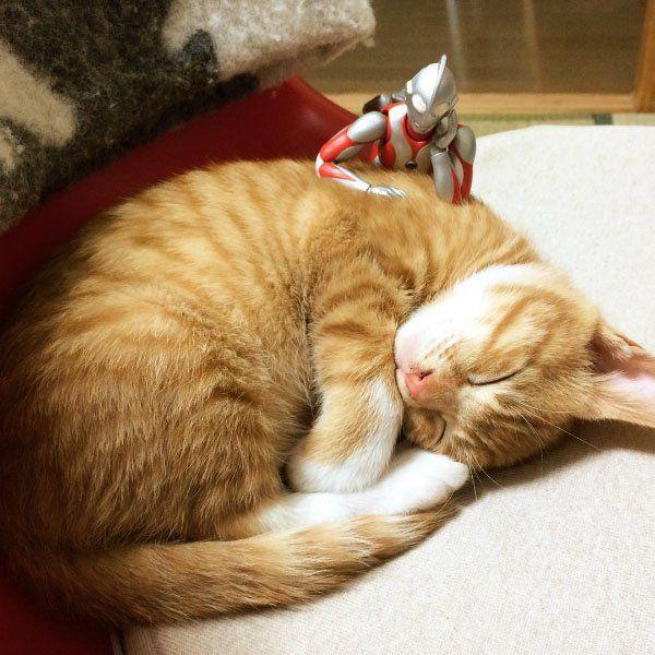 ウルトラマンが見守る赤ちゃんネコの成長記録:ハムスター速報                                                                                                                                                     もっと見る