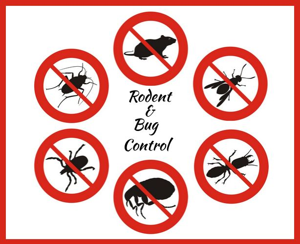 Pest Control - Get Rid From Rodents and Bugs | Rodent control and Bug control #Auckland are control its population and service you as best treatment of #pest control for your home. #pestcontrol