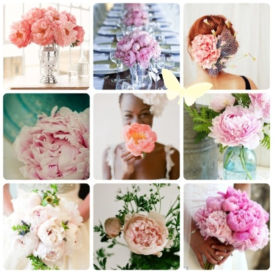 we love peonies hochzeitsdeko pfingstrosen just married pinterest. Black Bedroom Furniture Sets. Home Design Ideas