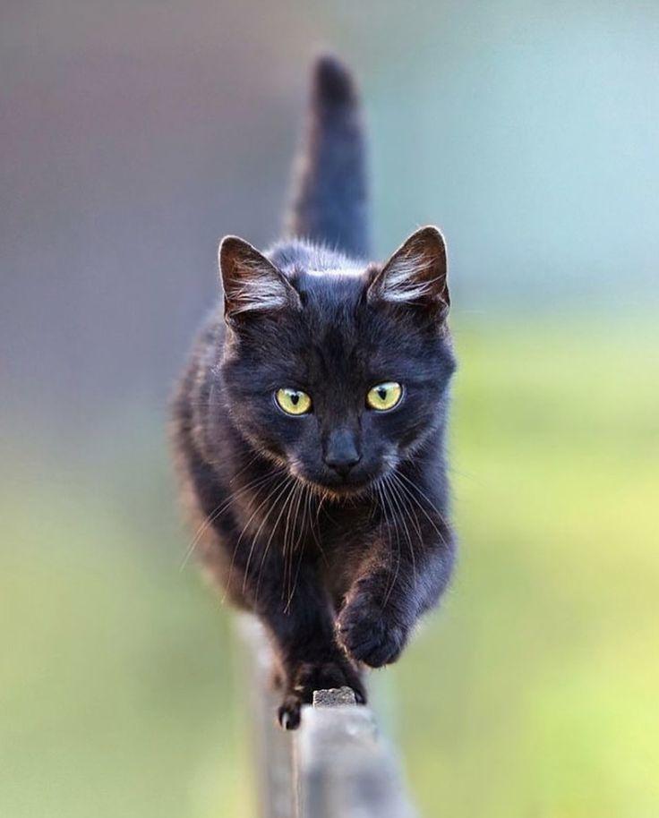 Black kitten's balancing act.