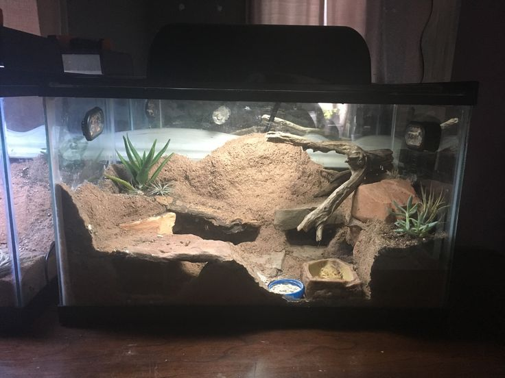 Best 25 Gecko Terrarium Ideas On Pinterest Reptile