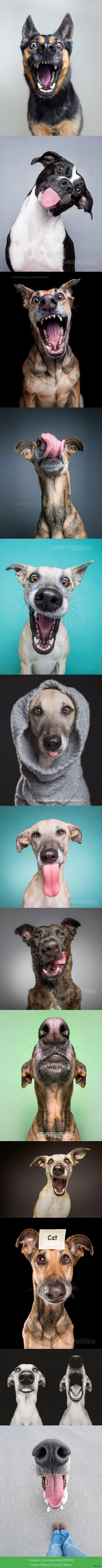 Прикольные собачьи портреты :)