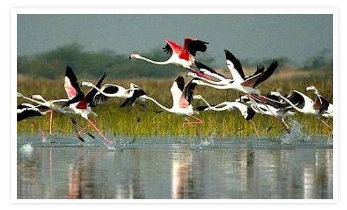 Keoladeo Bird Sanctuary Bharatpur, Bird Sanctuary Bharatpur