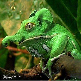 Elephant Frog - now extinct