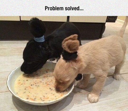 """Kkkkkkkkkkkk fiz muito com o meu cocker quando era filhote """"problem solved"""""""