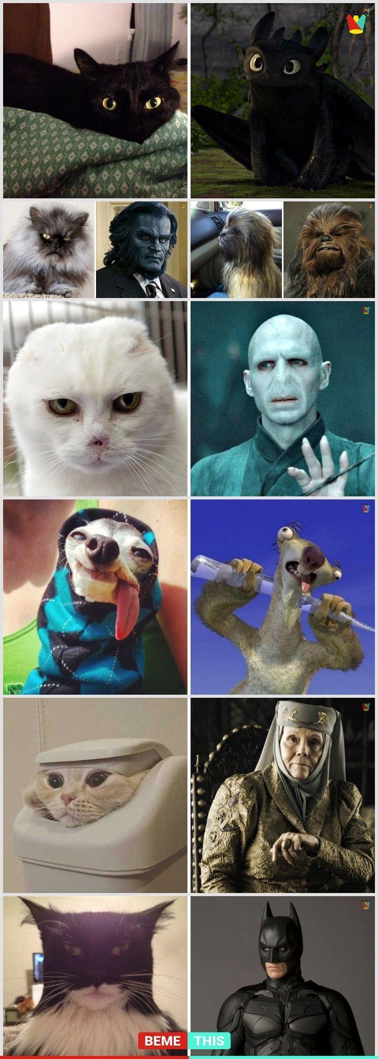 10+ coole dieren die eruit zien als beroemde fictieve personages