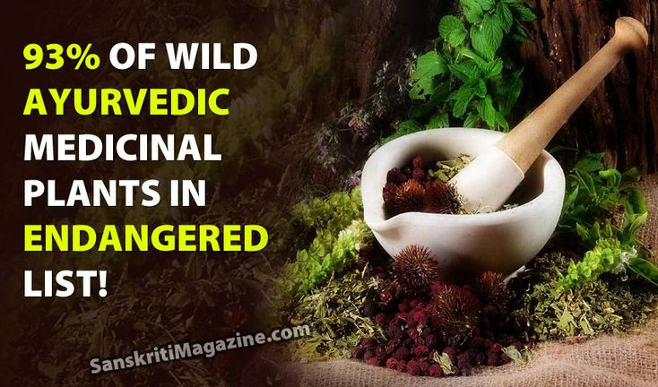 Ninety three percent of wild medicinal plants used for making ayurvedic medicines are endangered and efforts are being made to relocate them from their usual habitat to protect them. The threat to the plants came to the fore in an assessment exercise in different states carried out by the Botanical Survey of India. Researchers have recently found that extinction rates are currently 1000 times higher than normal due to deforestation, changes in climate, and the depletion of ocean fisheries.