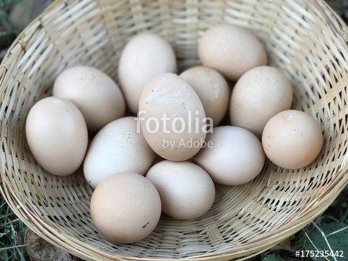 """Download the royalty-free photo """"Many fresh organic eggs in a basket"""" created by yournameonstones at the lowest price on Fotolia.com. Browse our cheap image bank online to find the perfect stock photo for your marketing projects!"""