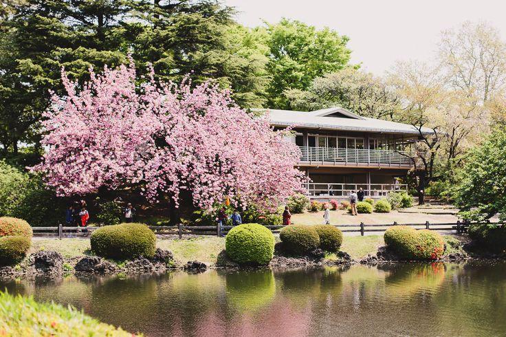 Tokyo Japan - Shinjuku Gyoen National Garden — I am Suanlee