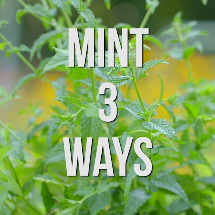 The 25 Best Mint Green Wallpaper Ideas On Pinterest: Best 25+ Mint Green Flowers Ideas On Pinterest