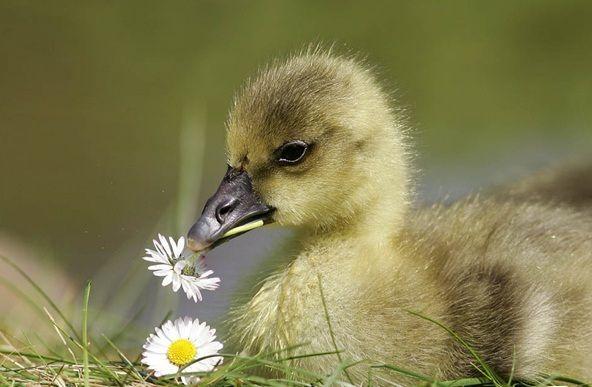 Bilder von süßen Babys süße Tierbilder mit Anführungszeichen süße Krawatte …   – Adorable Animals
