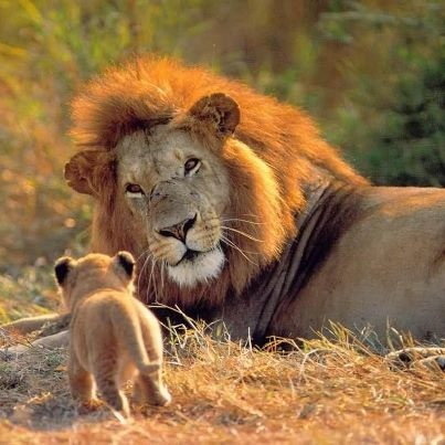 omg... wow...Can U see/feel His Love for His Baby Cub?? <3 n what a cute little cub butt !! hee hee <3 Gosh How I too just <3 all animals big n small <3 Want to help Protect These guys n more? www.worldwildlife.org <3 Does Just That <3