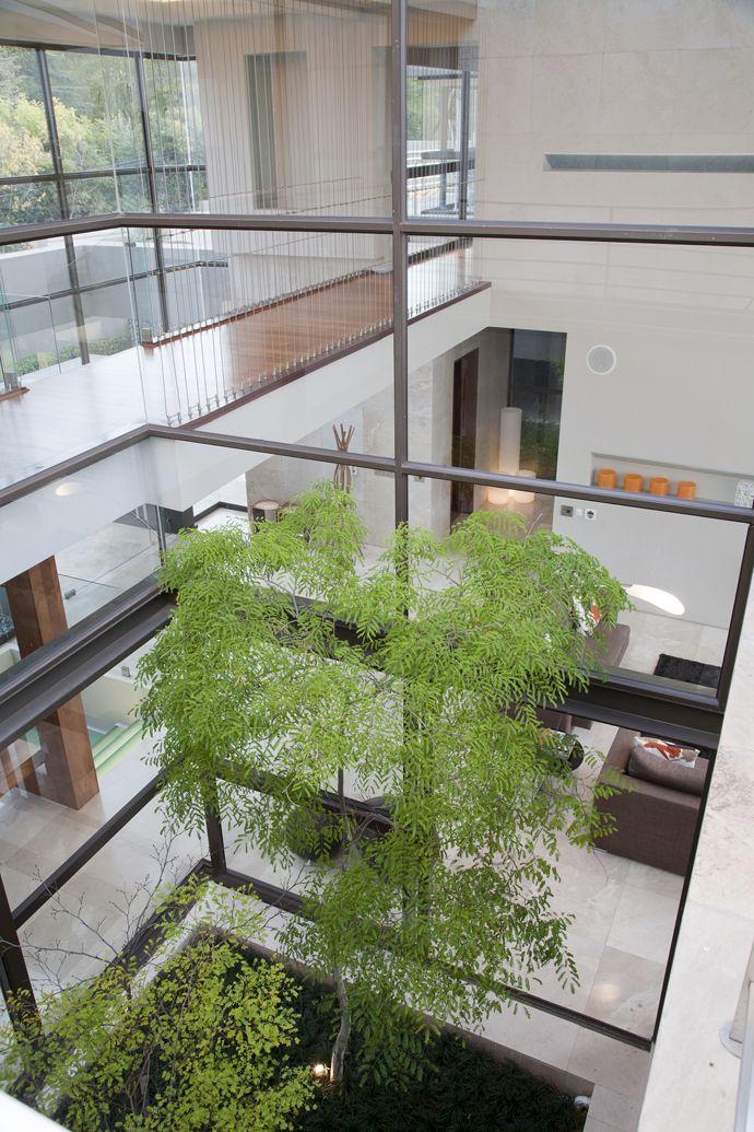 Modern Glass House Designed Around Three Massive Trees