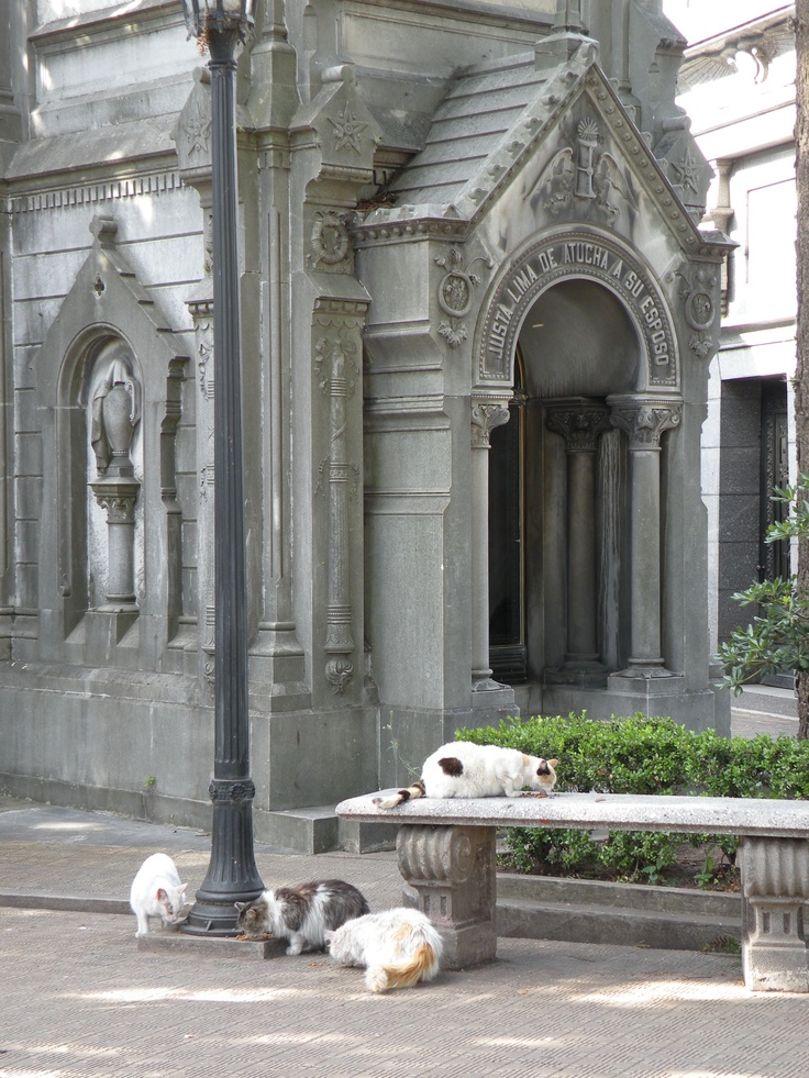 recoleta chat I am renting an apartment in recoleta gay in recoleta - buenos aires forum some people enjoy meeting people to chat and talk etc and are no.