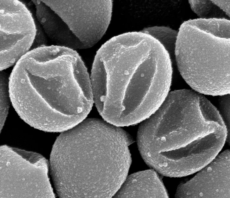 Scanning electron microscopy image of micron-sized particles, so-called colloids, with a smiley face on one side of the sphere. The particles are made by solidifying soft spheres, which induces buckling of the outside of the shell resulting in dents. In this particular case, the dents form smiley faces on al particles! These particles are used in self-assembly experiments to obtain larger structures with novel physical properties - Vera Meester
