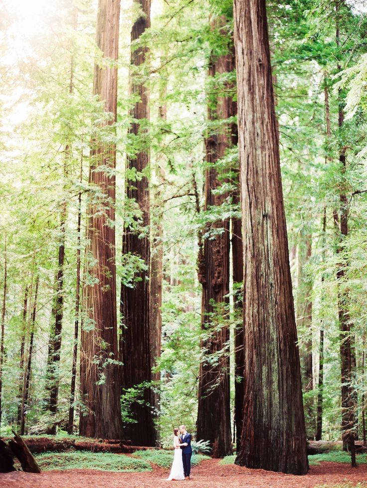 Magnificent California Redwoods! See more on SMP: http://www.StyleMePretty.com/2014/06/04/elopement-among-the-redwoods/ Photography: PerryVaile.com