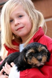 Buying a Puppy or Dog: Take the PetSolutions Test - Dog Pet Care Corner - PetSolutions