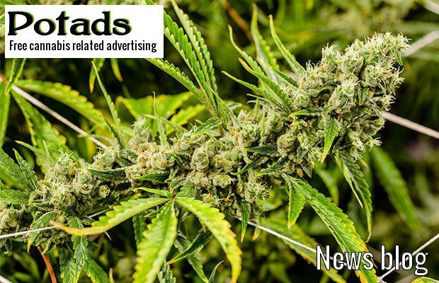 CA: San Diego's Only Commercial Marijuana Grower To Greatly Expand Production  http://potads.blogspot.com/2017/11/ca-san-diegos-only-commercial-marijuana.htmlpic.twitter.com/TNlpbPp8WI https://twitter.com/BackyLeaf/status/930128245470777349