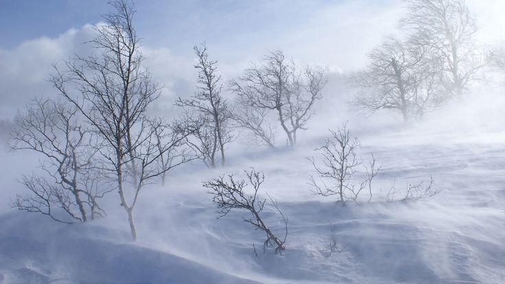 Winter wallpaper windy