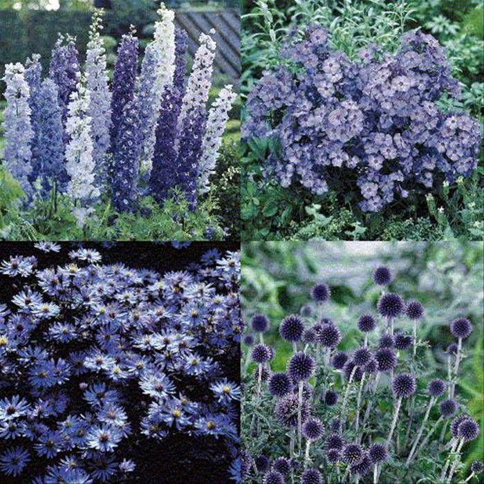 Blue Border Garden - 12 plants