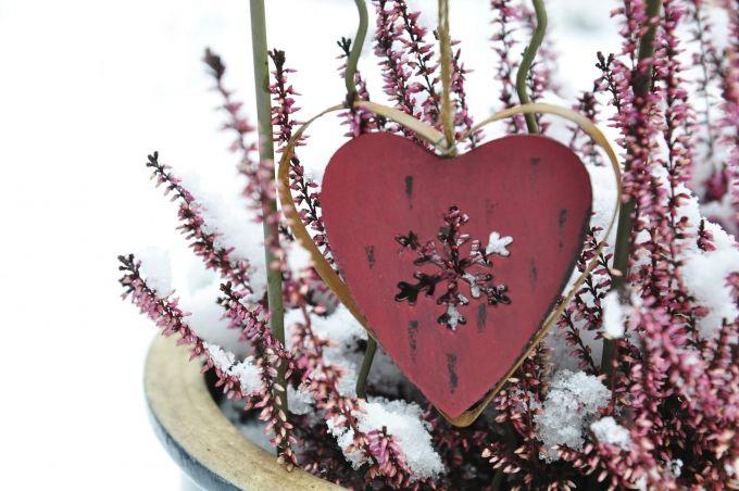 Winterharte Balkonpflanzen: Schneeheide als buntes Highlight | Garten-News | Garten