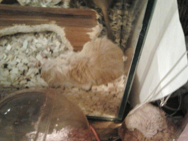 Today, September 23 my gerbil MURU died R.I.P