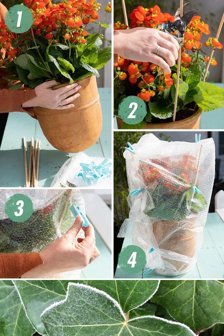 So schützt du deine Pflanzen vor dem Nachtfrost. – Elisa Eili
