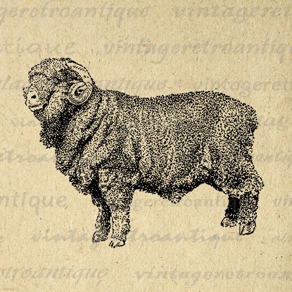 Printable Graphic Merino Ram Sheep Image by VintageRetroAntique