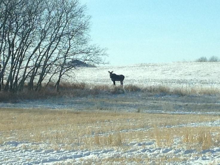 Tiny bull 5