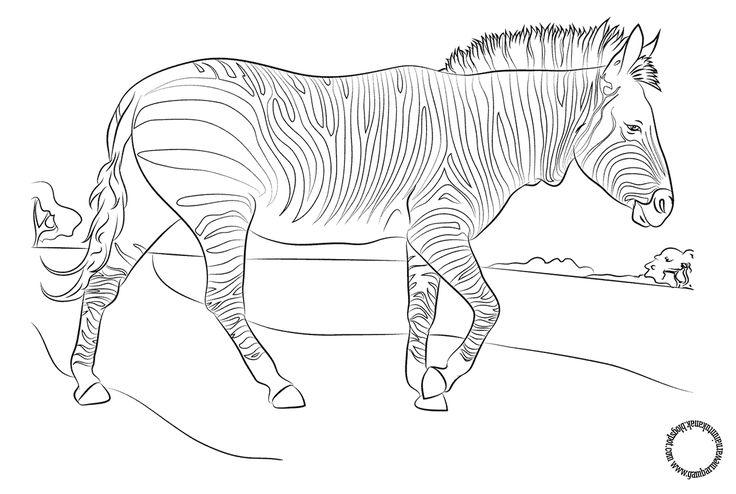 Gambar Mewarnai Zebra Untuk Anak