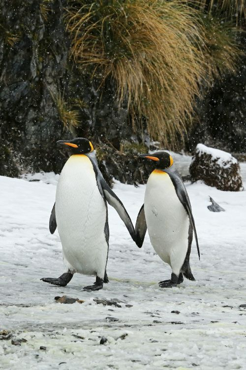 Two love birds out for a stroll...