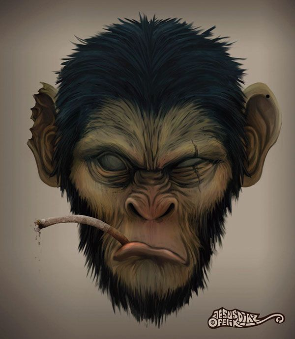 primates by poloverde