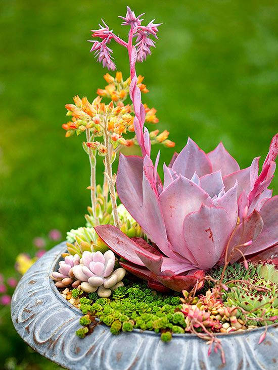 This tabletop #succulent container is a great project for summer because succulents are so hardy and easy to grow. This dish garden can sit atop an outdoor ledge or patio table in the summer and can overwinter indoors as a #houseplant. #containergarden #gardening